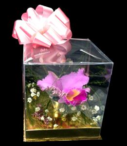 cod 312 - Caja con orquídea tradicional
